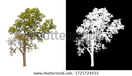 Isolated single tree on white background with clipping path and alpha channel  #1721724433