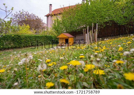 Cute wooden dog house in the garden during spring time #1721758789