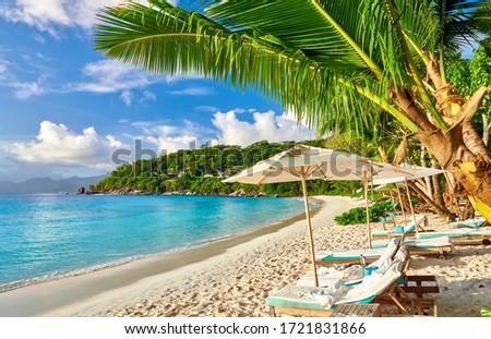 Beautiful Petite Anse beach with palm tree at Seychelles, Mahe #1721831866