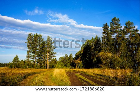 Rural road to forest landscape. Trail to forest. Forest trail view. Forest nature trail landscape #1721886820