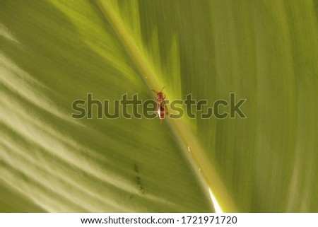 In this picture, there is a bee kid who is collecting juice from the leaves of the plant in his hive which will later become honey.
