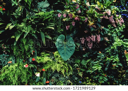Lush foliage background. Green plant wall design of tropical leaves (anthurium, epiphytes or ferns). Dark green plants growing in cloud forest, rainforest in tropical climate Royalty-Free Stock Photo #1721989129