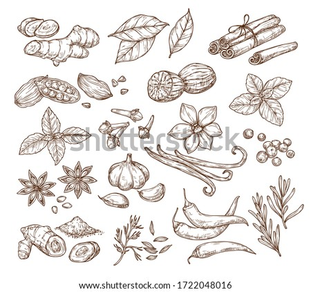 Vector sketch illustration of spices and herbs. Isolated on a white background. Ginger, cinnamon, vanilla, anise, basil, rosemary, turmeric. Use to create menus, packaging, patterns, prints. Royalty-Free Stock Photo #1722048016