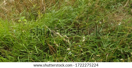 after zooming pic you can see beautiful butterfly in the green grass