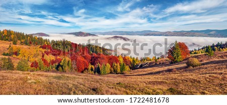 Panoramic morning view of mountain hills with thick fog. Sunny autumn scene of Carpathians, Ukraine, Europe. Bright fall landscape of fabulous mountains. Beauty of nature concept background.
