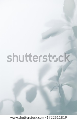 abstract blurred background of shadow from the leaves on the wall #1722511819