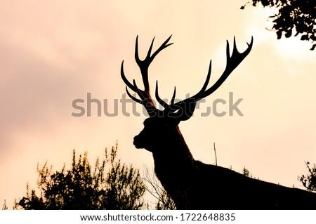 Deer, European deer Spain. Great Horns Royalty-Free Stock Photo #1722648835