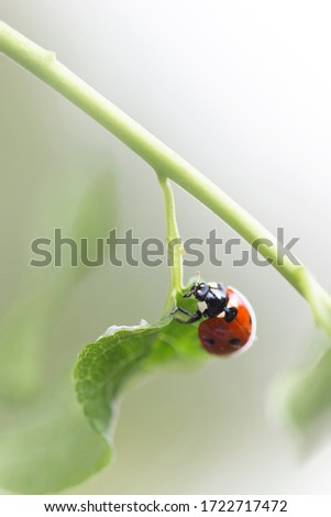 Artistic picture of ladybug climbing on green leaf