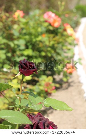 Find the perfect rose picture garden pictures, Find beautiful garden stock images in HD, Find high-quality Garden stock photos and editorial news pictures, Every beautiful cottage garden & red flowers