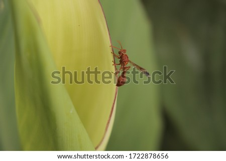 We know that honey bee collects juice from flowers and collects it in its hive which makes honey, but she is also taking juice from the leaf of a plant in this picture shown.