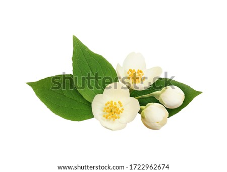 Jasmine flowers and leaves in a floral arrangement isolated on white #1722962674