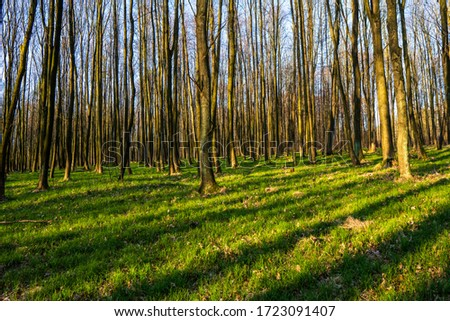 beautiful forest with green grass at sunrise, Czech Republic #1723091407