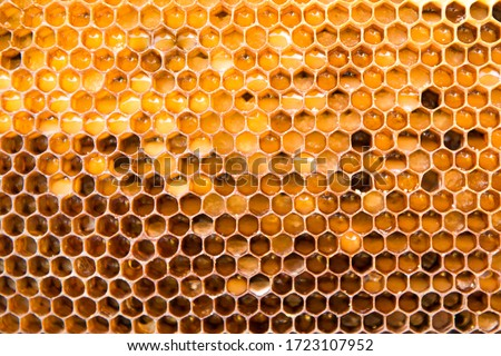 Background texture of a section of wax honeycomb from a bee hive filled with golden honey |. Beekeeping concept Royalty-Free Stock Photo #1723107952