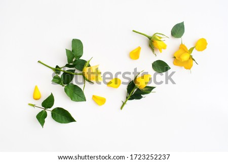 Beautiful yellow rose with green leaves and petals on white background #1723252237