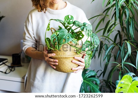 girl holds a houseplant in her hands. hobby houseplants. self-isolation leisure. Comfort in home Royalty-Free Stock Photo #1723262599