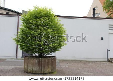 a small tree in city center Delmenhorst(Germany) Royalty-Free Stock Photo #1723314193