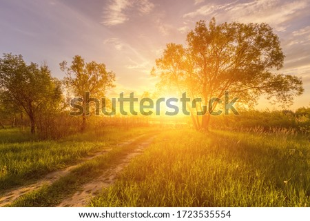 Scene of beautiful sunset or sunrise in a summer field with willow trees and grass. Landscape. Royalty-Free Stock Photo #1723535554
