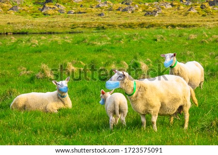 herd of sheeps with surgical mask. Concept of herd immunity, conformism and social distancing for COVID-19 pandemic outbreak. New Coronavirus SARS-CoV-2 infections in animals. Royalty-Free Stock Photo #1723575091