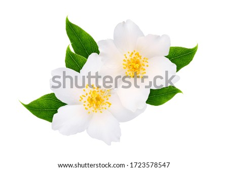 Jasmine flowers with leaves isolated on white background #1723578547