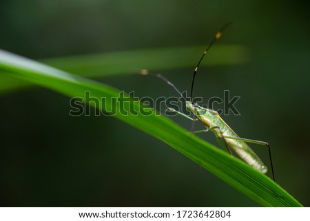 Picture of Green stink bug on a leaf