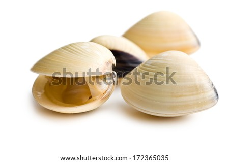 fresh clams on white background #172365035