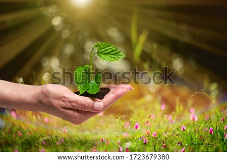 Planting a young tree in the forest.Growing,Seedling.New Life Concept. #1723679380