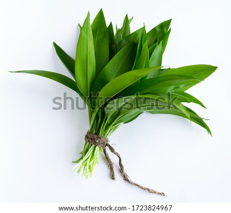 Ramson, bunch of wild garlic isolated on white background Royalty-Free Stock Photo #1723824967