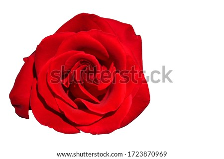 Red Rose Isolated - Top view fresh single bloom flower on white background with clipping path - for valentine love concept  , Floral Object and beautiful detail   #1723870969