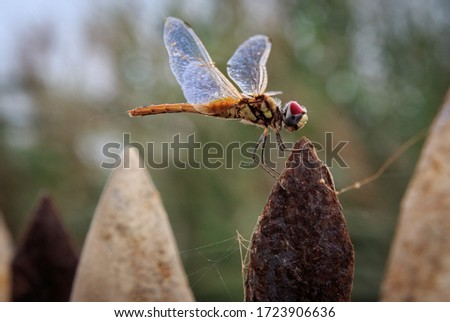 Macro pictures for insects from Sultanate of Oman