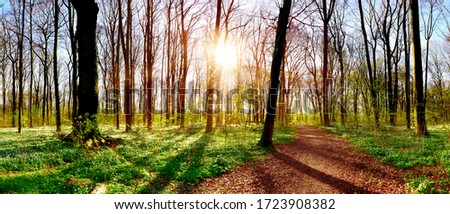 Forest panorama in spring with lots of little white flowers, a hiking trail and bright sun shining through the trees #1723908382