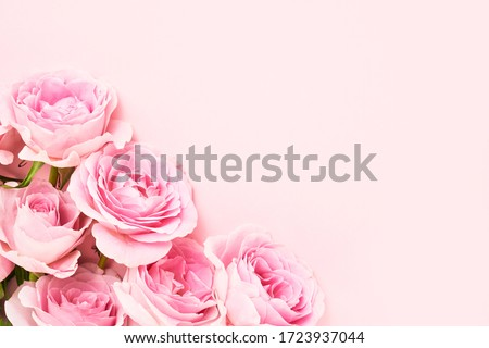 Bouquet of pink roses on pink background. Mother's day, Valentines Day, Birthday celebration concept. Greeting card. Copy space for text, top view