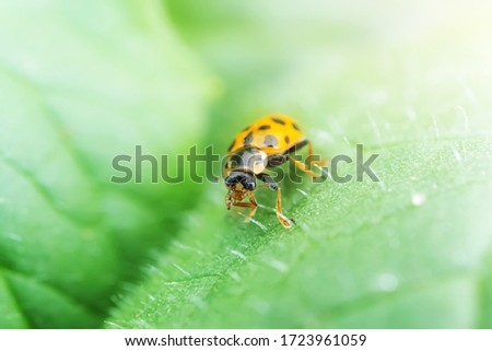 Ladybug on a green plant. The concept of nature, spring, summer. Environment Day. Macro photo. Copyspace. #1723961059