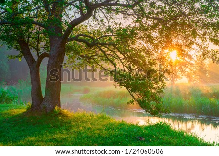 Summer landscape with green tree illuminated with warm sunlight. Scenic summer background with sunbeams shining through tree branches. Picturesque park.