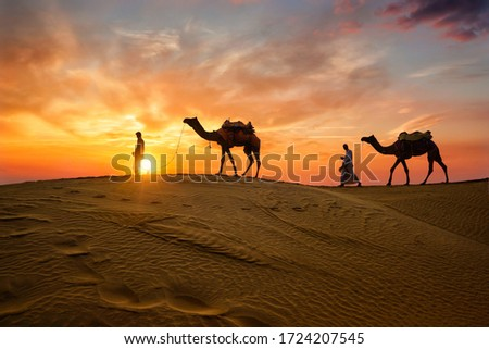 Indian cameleers (camel driver) bedouin with camel silhouettes in sand dunes of Thar desert on sunset. Caravan in Rajasthan travel tourism background safari adventure. Jaisalmer, Rajasthan, India Royalty-Free Stock Photo #1724207545