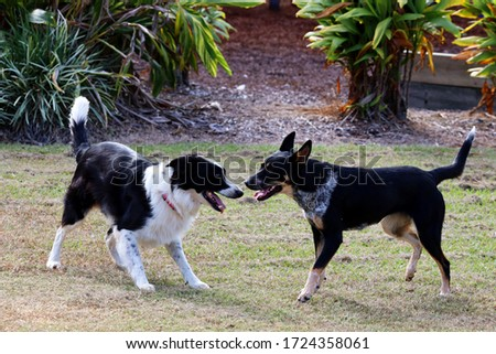 Dogs playing: Canines playing in the park outside on a nice morning, they are having fun.