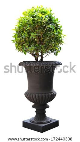 Ornamental Small green decorative tree #172440308