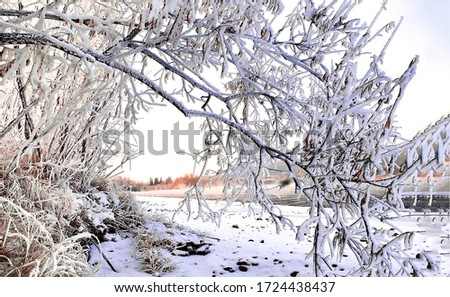 Snow covered winter tree branch. Winter snow tree branch. Winter snow scene #1724438437