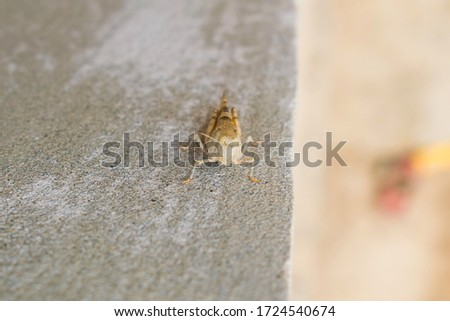 A desert locust sitting on a wall with blurred background.