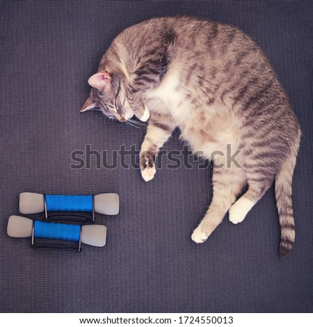 A tired fat cat lies on a yoga mat after a sports workout. Concept of isolation during the coronavirus epidemic and fitness training