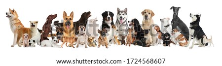 Collage with different dogs on white background. Banner design #1724568607