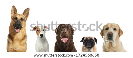 Collage with different dogs on white background. Banner design Royalty-Free Stock Photo #1724568658