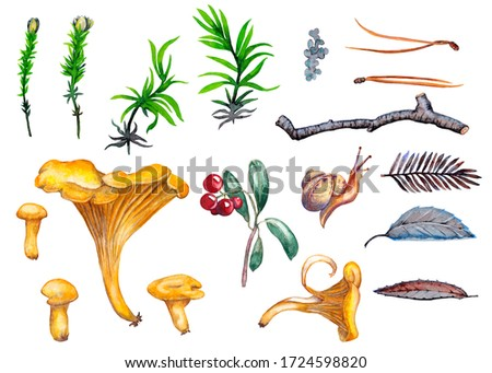 Clipart of realistic forest plants. Colorful chanterelle mushroom, moss, grass, leaves, spine and twigs with cowberries and snail.  Watercolor hand painted isolated elements on white background.