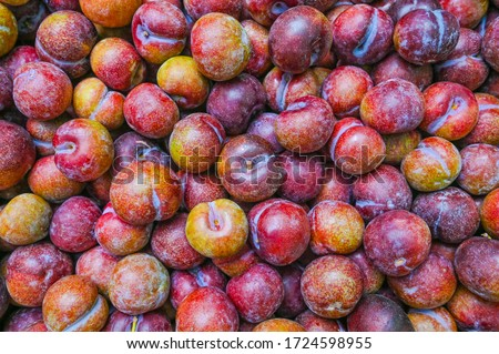 Ripe blue plum fruits harvested in fall as nackground texture, Image fruit product blue plums. #1724598955