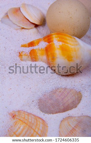 Sand can cover the seashells at beach. A picture of different types of shell on the white sand.