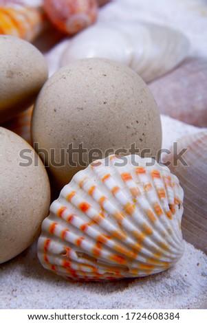 Some sea symbols in a picture: scallop seashell, sand and round stones.