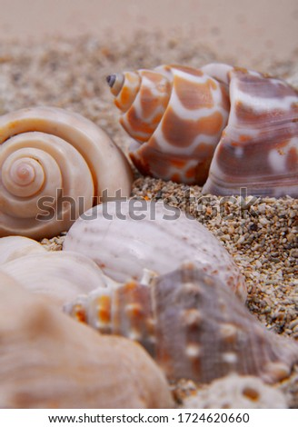 A picture of different types of seashells on a sandy beach.
