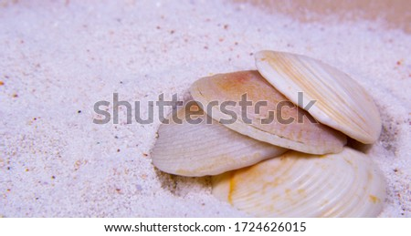 A picture of some clam seashells in different light colors.