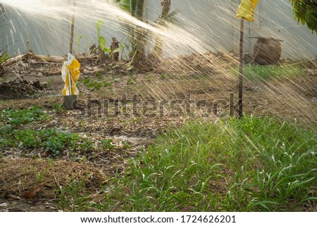 Woman watering the vegetable garden at the backyard of the house with light of sunset in background #1724626201
