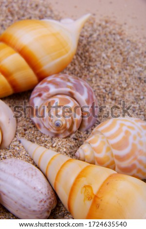 A picture with theme of sea of some alphabet seashells on sand.