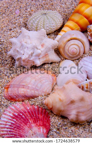Different types of colorful seashells in one picture: horse conch, king's crown, sea urchin, line's paw, etc.